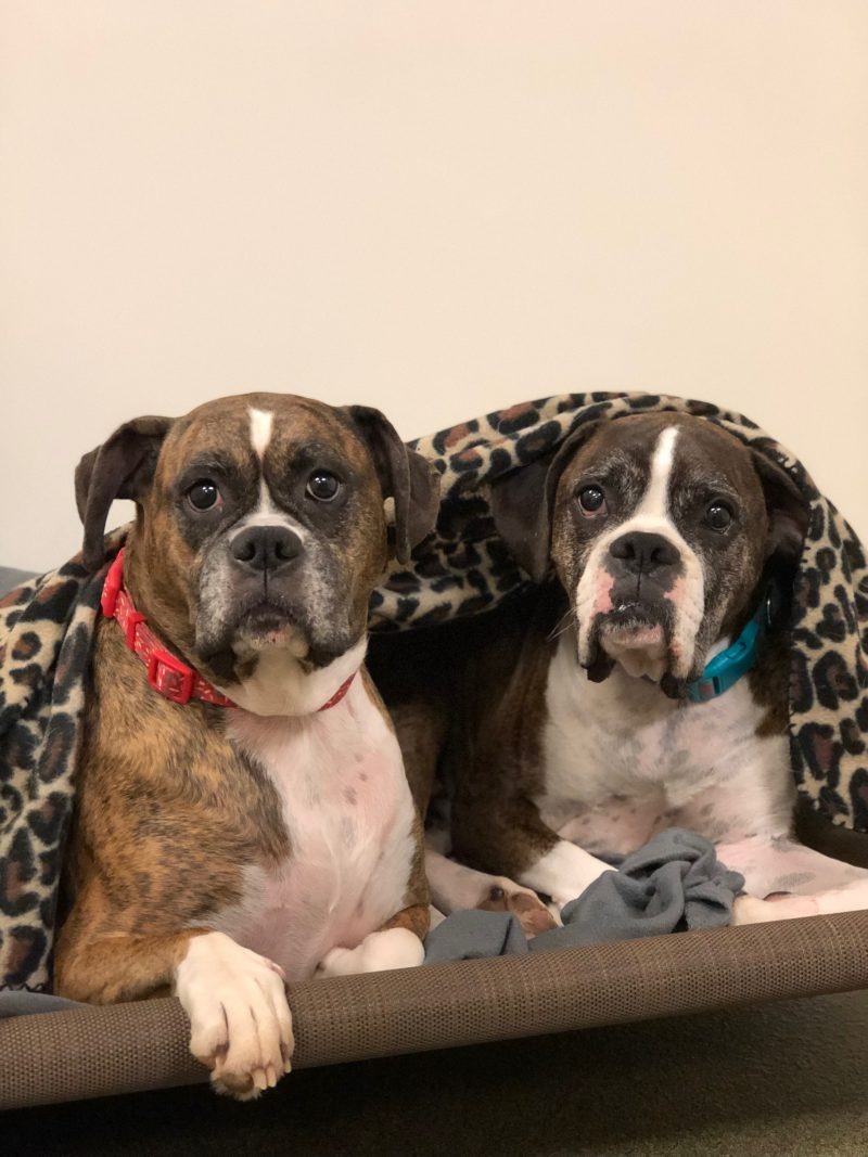 Board Room - Multiple Dogs