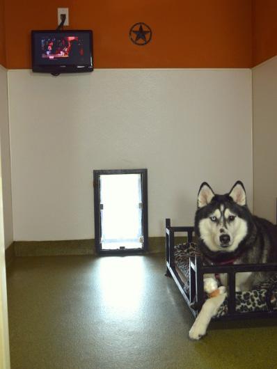 Bunkhouse Boarding Rosehill Pet Resort