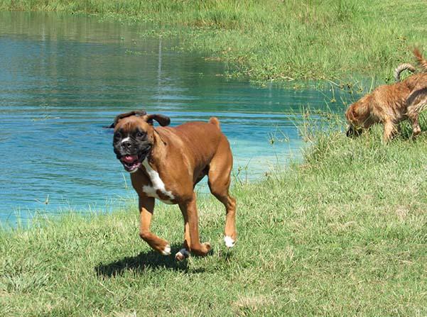 Rosehill-Dogs